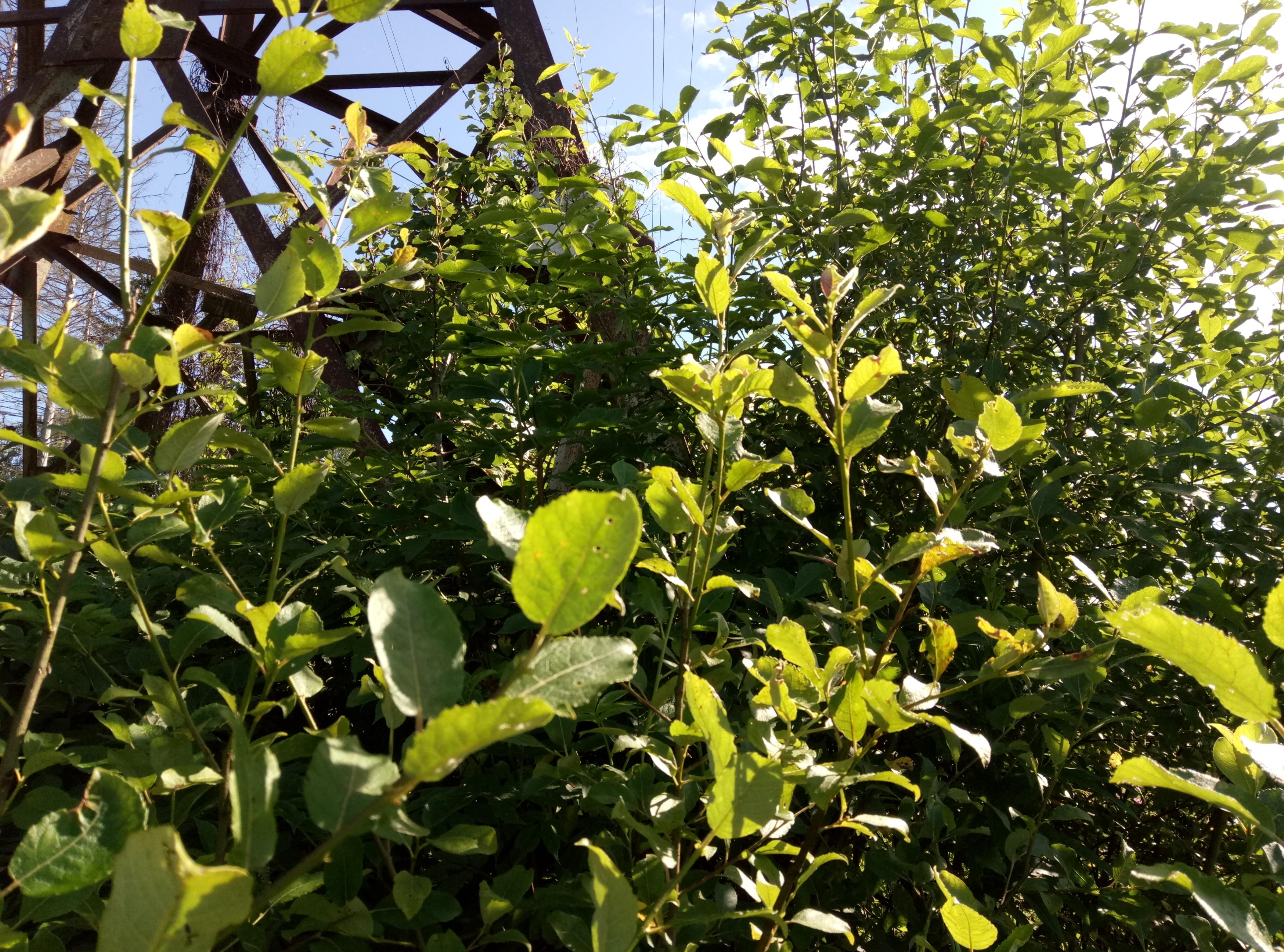 кустарниковая растительность на ВЛ 35 кВ