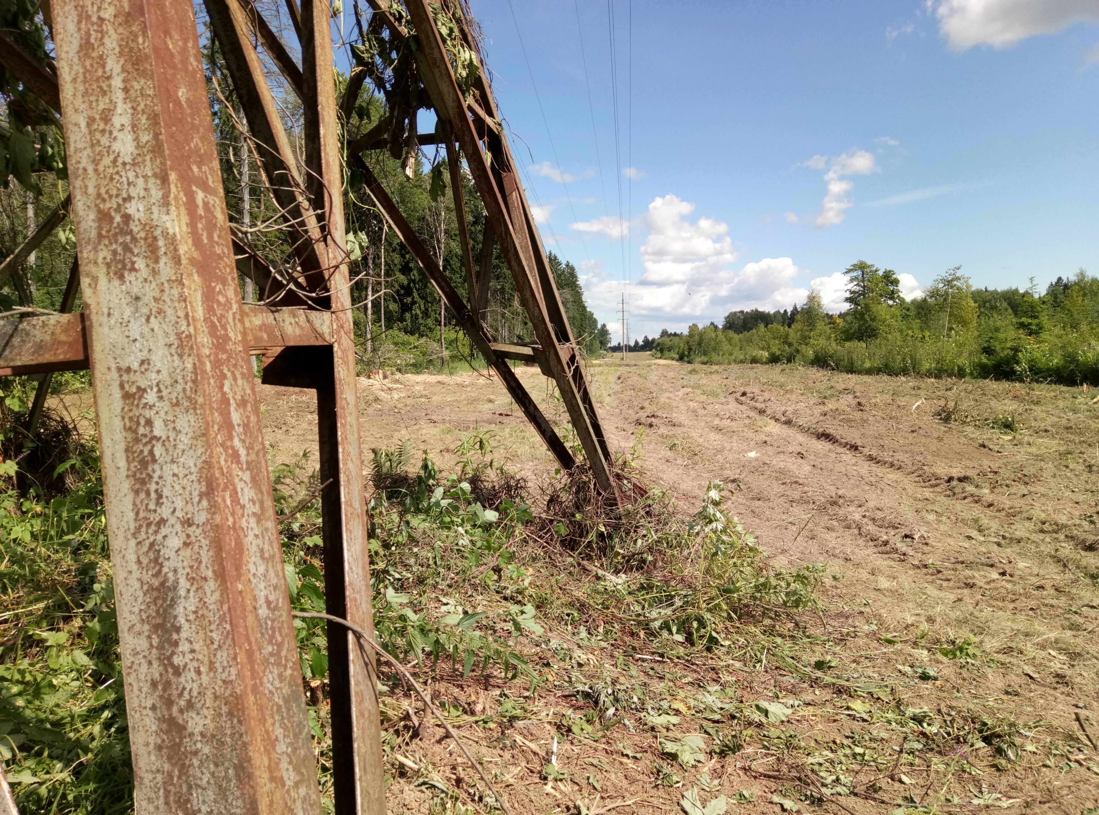Фото расчищенного участка ВЛ 35 кВ